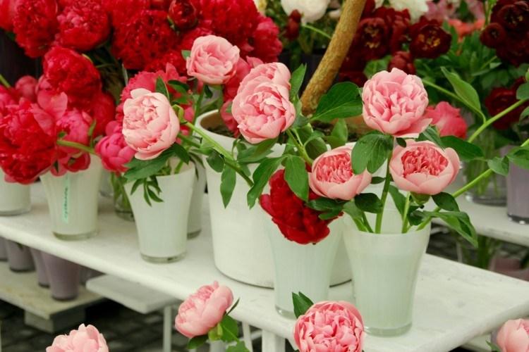 123 Gambar Bunga Mawar Beserta Cara Menanam Dan Arti Filosofinya